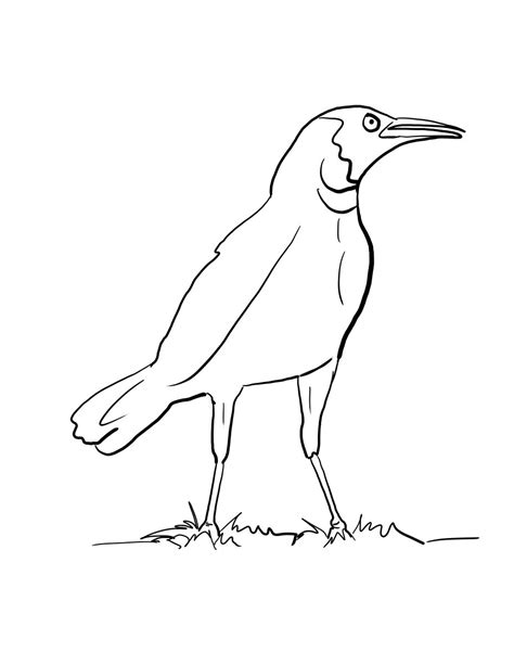 crow bird coloring page black crow coloring page coloring pages