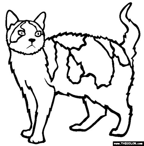 Picture Of A Cat To Color by Easy Pictures Of Cats To Color Coloring Pages Page