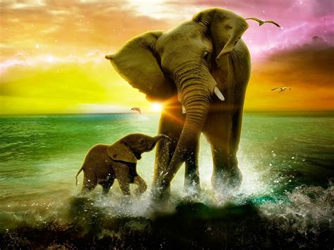 elephants images backgrounds hd wallpapers