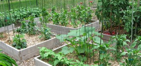 homestead vegetable gardening it s time to plan your vegetable garden homestead