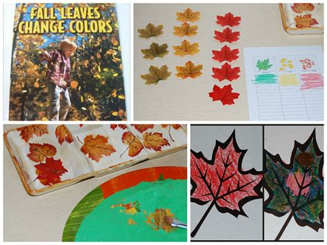 kindergarten activities with leaves why do fall leaves change colors playfulpreschool
