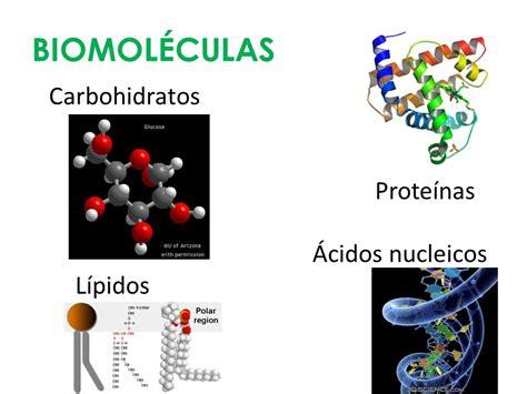 proteinas y acidos nucleicos biomol 233 culas ppt descargar