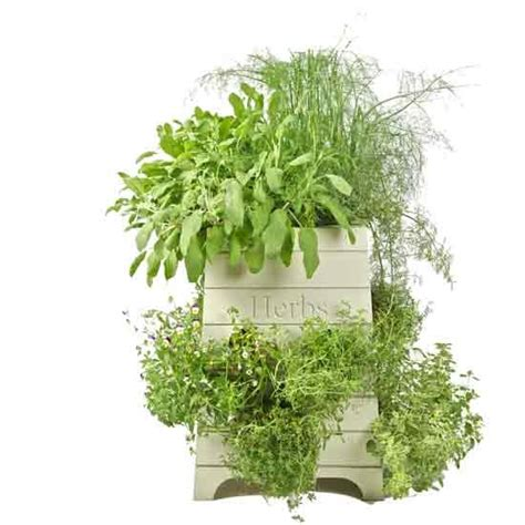 herb pots outdoor how to decorate outdoor pots of plants home decorating ideas