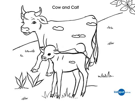 kids activities cow colouring pages