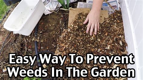 An Easy Way To Mulch And Prevent Weeds In The Garden Youtube How To Keep Grass Out Of Vegetable Garden