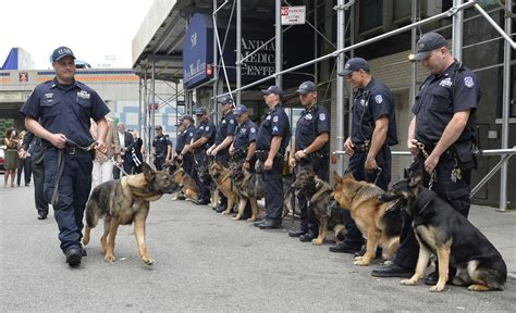 nypd equipment section one police plaza related keywords suggestions for nypd k 9