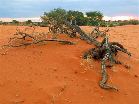 How I Decorate My Home by The Kalahari Desert Gondwana Collection Namibia