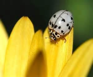 ladybug colors amazing ladybugs pics treehugger