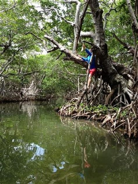 rope swings in florida creek across from hton picture of paddle the florida