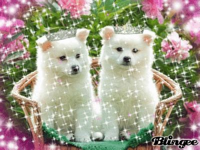 imagenes de perritos tiernos de buenos dias imagenes tiernas de perritos animados imagenes tiernas