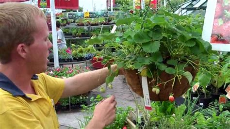 create  perfect hanging basket   easy