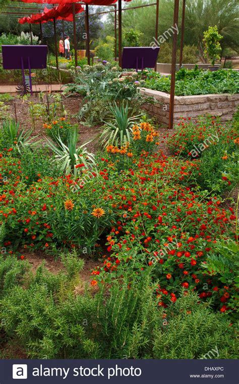 botanical gardens az desert botanical garden arizona stock photo