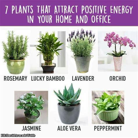 feng shui plants for office desk 789 best images about bloemen en planten on