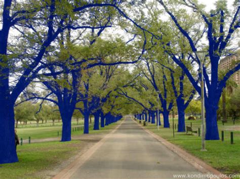 blue trees blue trees surreal spectacle coming to seattle parks