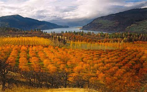 imagenes jardines otoño jard 237 n de los cerezos 225 rboles del oto 241 o fondos de pantalla
