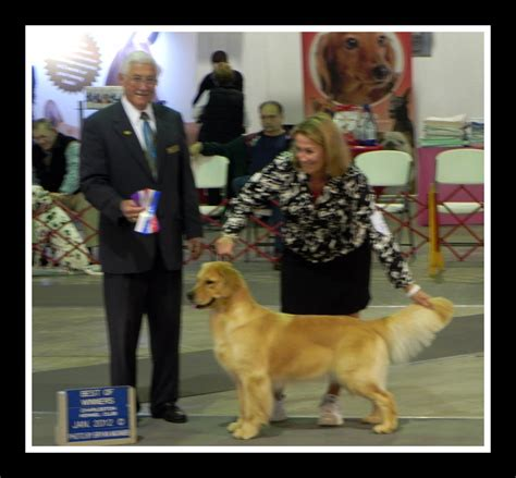 golden retriever charleston sc oakleaf goldens golden retrievers south carolina