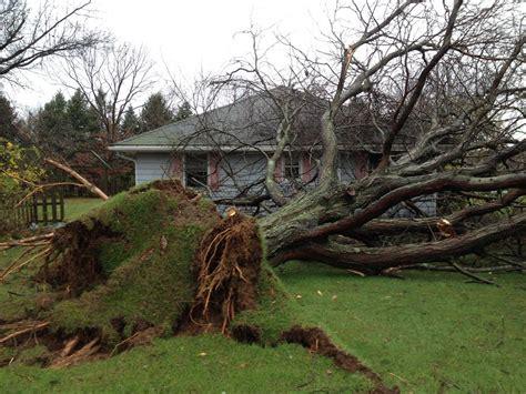 Stump Decorations Fallen Tree Hurricane Sandy Polt Mountain Nj 102912 Web