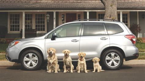 golden retriever driving car commercial ad of the day subaru s road tripping dogs are