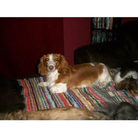 haven house allentown marissa s doxie haven dachshund breeder in allentown pennsylvania