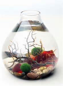 Cool Betta Fish Tanks betta fish tank : The Refined Fin Blog