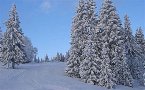 imagenes arboles invierno 193 rboles del invierno camino nieve fondos de pantalla