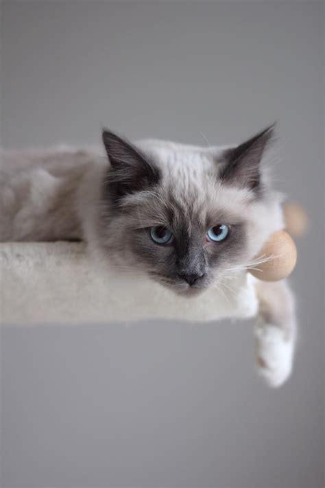 amaca gatto amaca da parete cosedagatto