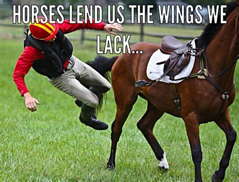 Horse Meme - 17 best images about trikee tack horsing around on