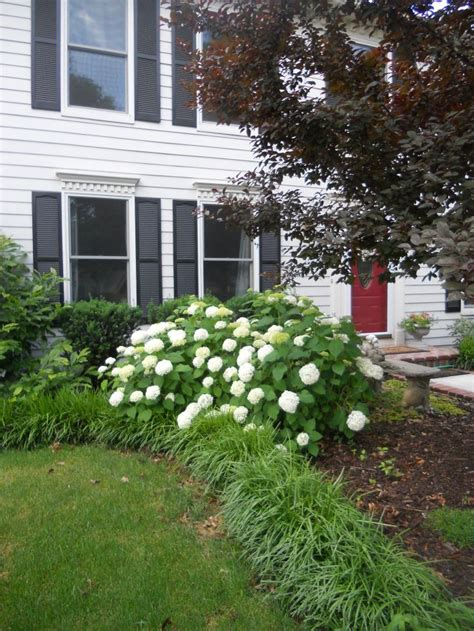 hydrangea front yard 56 best images about flower garden ideas on