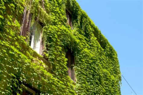 piante per giardino verticale giardino verticale la scelta ideale per chi ha poco