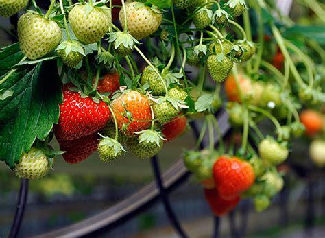 reset voicemail password blackberry bold jordgubbar bonden i skolan