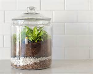 how to make a closed terrarium crate and barrel blog