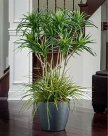 18 Cylinder Vase Deluxe Yucca Silk Floor Plant For Business And Home Decor