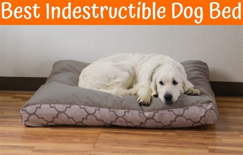 indestructable dog bed indestructible dog bed uk driverlayer search engine