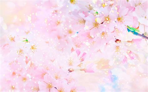 wallpaper sakura pink blossom 06 colors of spring 22april2015wednesday