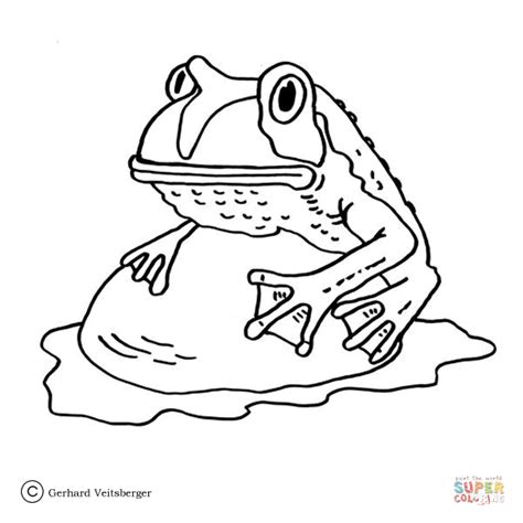 coqui frog coloring page coqui frog coloring pages coloring pages