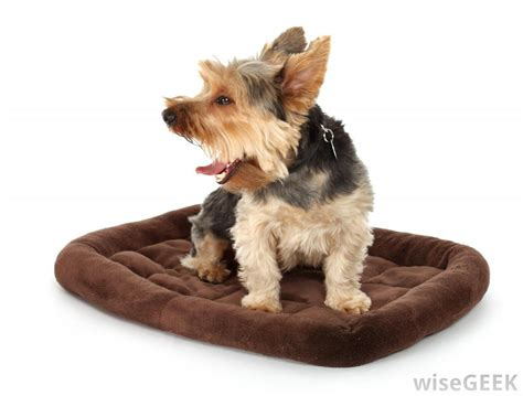 yorkie throwing up what can cause vomiting foam with pictures