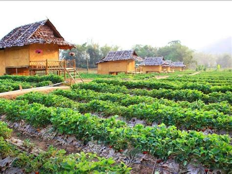 The Place Farm Resort Thailand Hotels In Chiang Mai Page 35 Thailand Travel Information