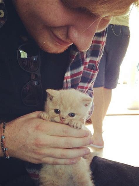 ed sheeran instagram ed sheeran spends some quality time with a kitten named