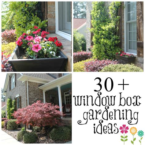 window box planting ideas wow your windows with window boxes debbiedoos