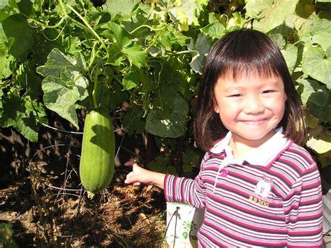 Our Vegetable Garden Asian Vegetable Garden