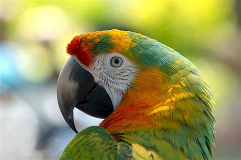 let s learn about unique birds letã s how do parrots live how do animals live