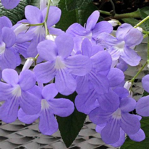 blumen und garten 2473 die 3161 besten bilder zu flowers auf wei 223 e