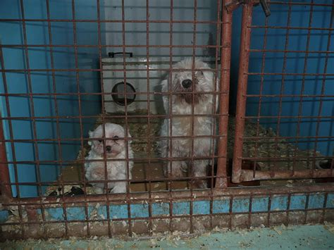 puppy mills in mn end show support of puppy mills forcechange