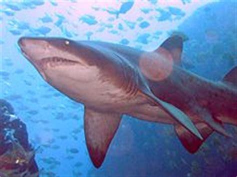imagenes animales que respiran por branquias branquia wikipedia la enciclopedia libre