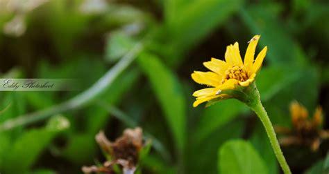 wallpaper bunga kecil bunga kecil by easydizzy on deviantart