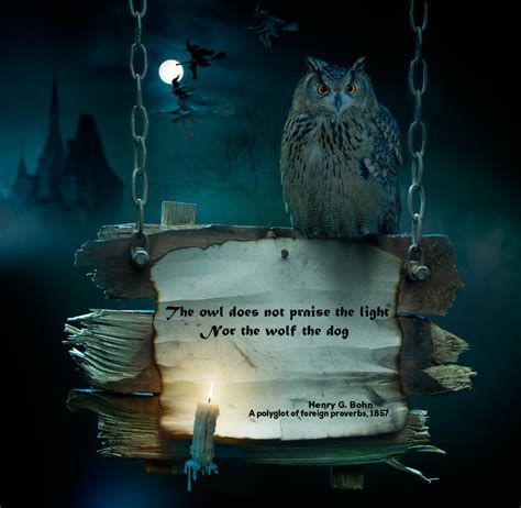 What Does It Mean When You See An Owl Archives Rise Of Owl Meanings