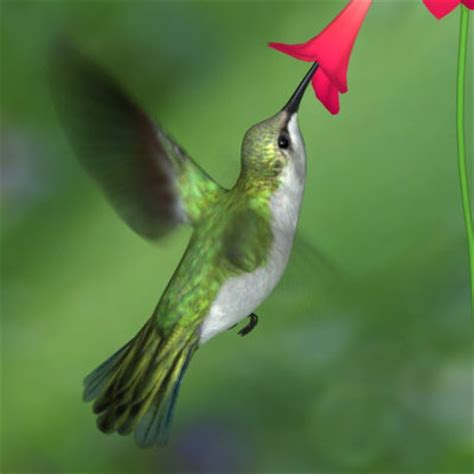 hummingbird feeders recipe for hummingbird food