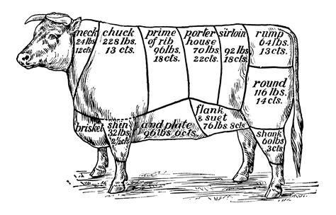 cow diagram understanding cuts of beef made easy