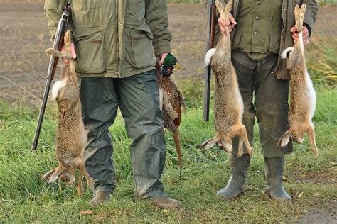 how to a to rabbit hunt how to hunt rabbits rabbit tips for beginners