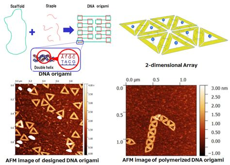 Dna Origami Applications - 2d array formation of dna origami nano micro system lab